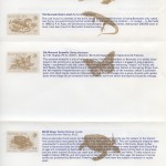 1979 Bermuda Wildlife Definitive Pt II liner reverse FDC