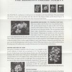 50th Anniversary of the Bermuda Orchid Society FDC liner